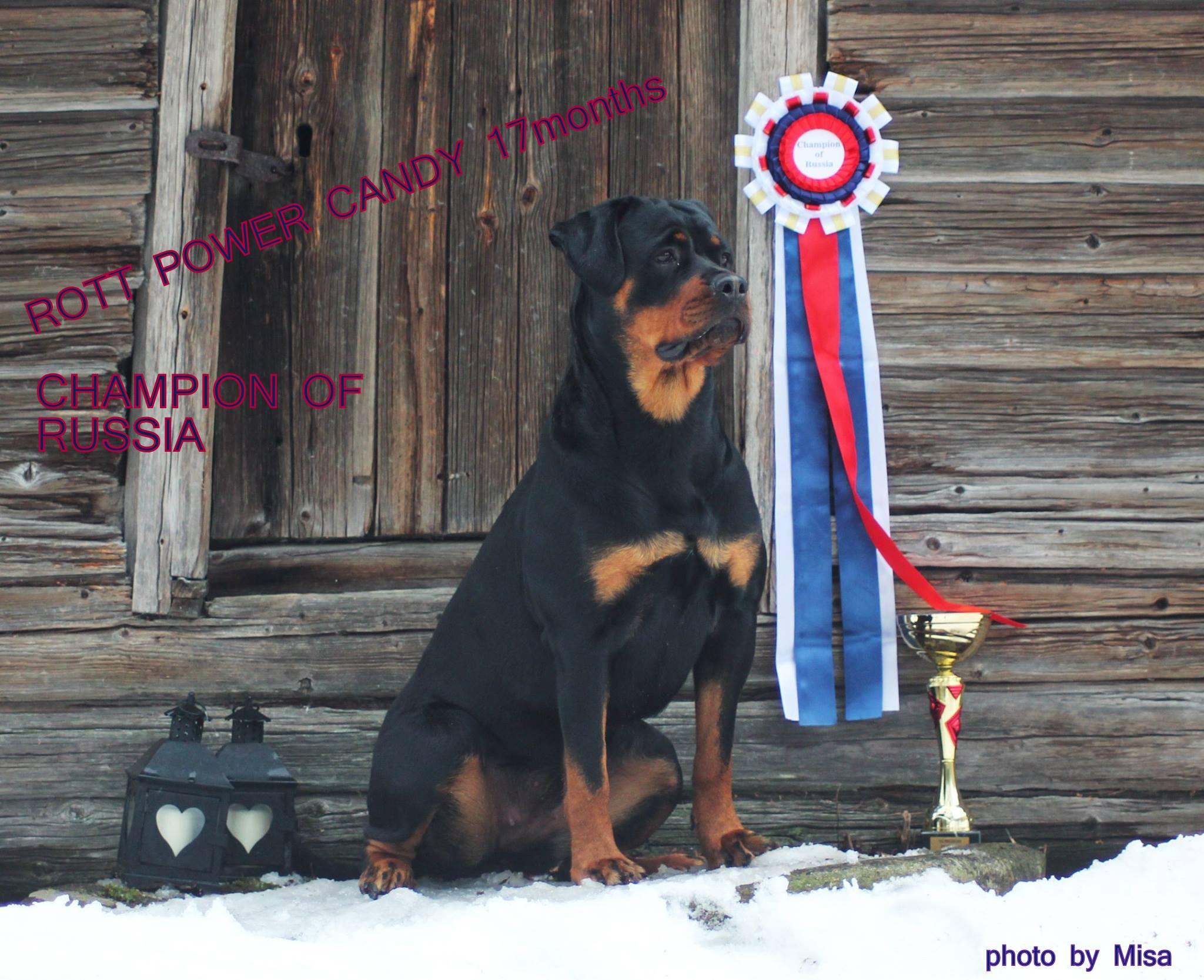 Lissu-venäjän-mva