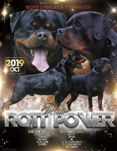 rottpower_M_syntyneet