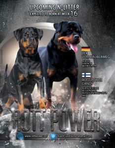 rottpower2020